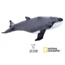 National Geographic - Ballena Mediana.